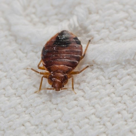 Bed Bugs, Pest Control in Ponders End, Enfield Wash, EN3. Call Now! 020 8166 9746