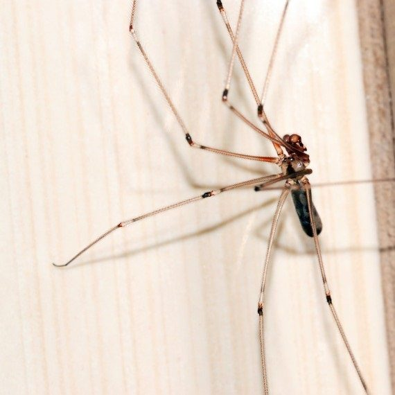 Spiders, Pest Control in Ponders End, Enfield Wash, EN3. Call Now! 020 8166 9746