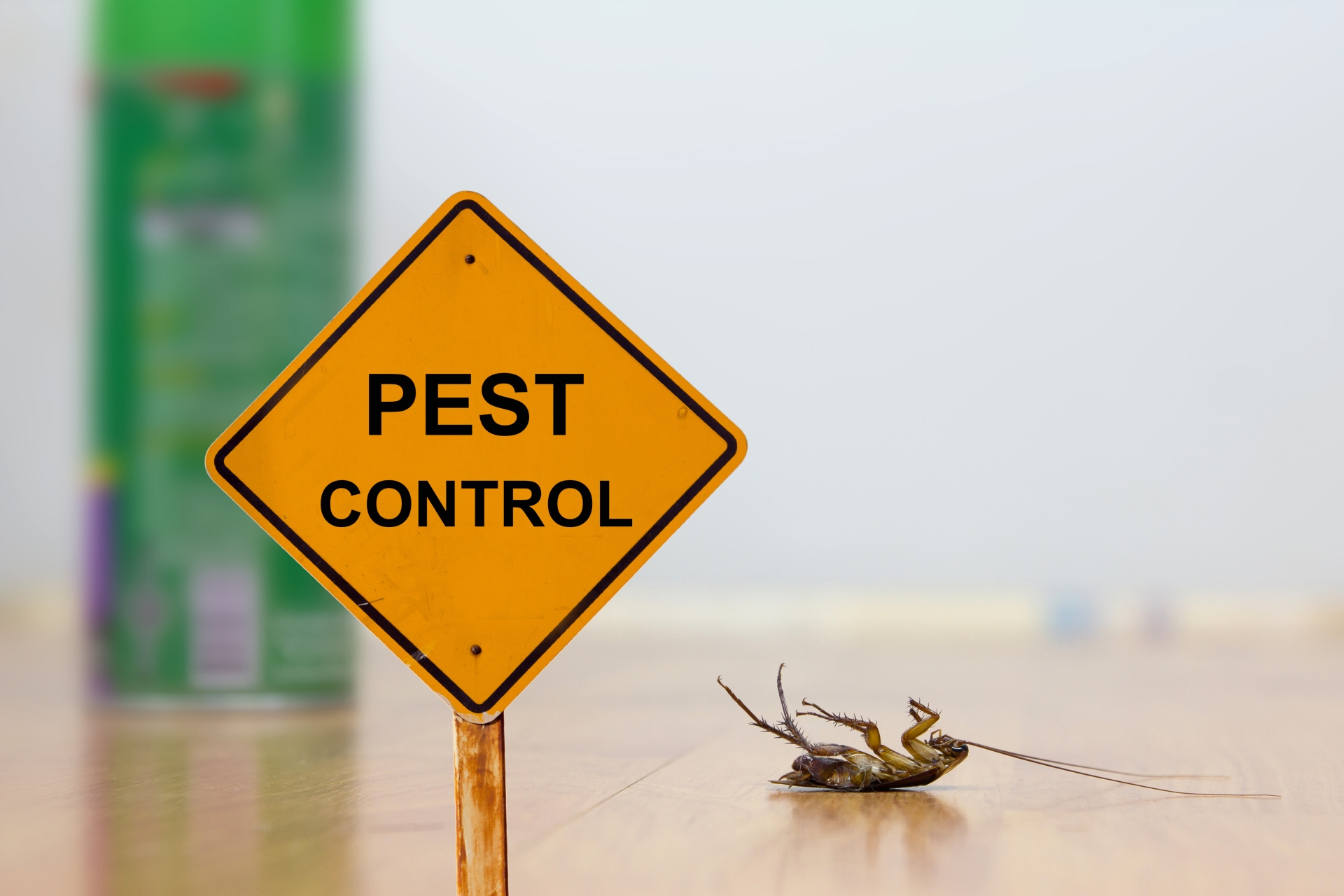 24 Hour Pest Control, Pest Control in Ponders End, Enfield Wash, EN3. Call Now 020 8166 9746