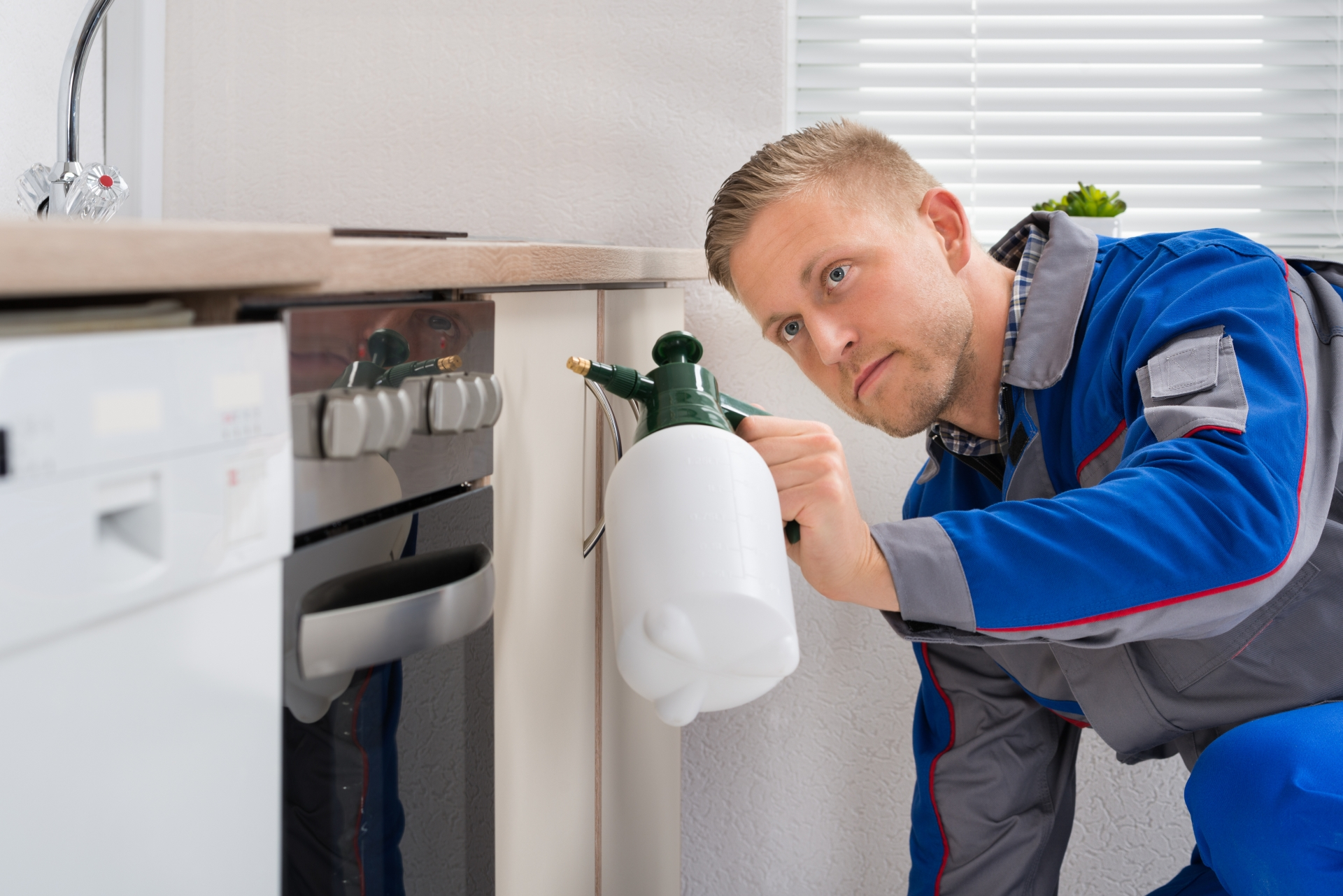 Pest Inspection, Pest Control in Ponders End, Enfield Wash, EN3. Call Now 020 8166 9746