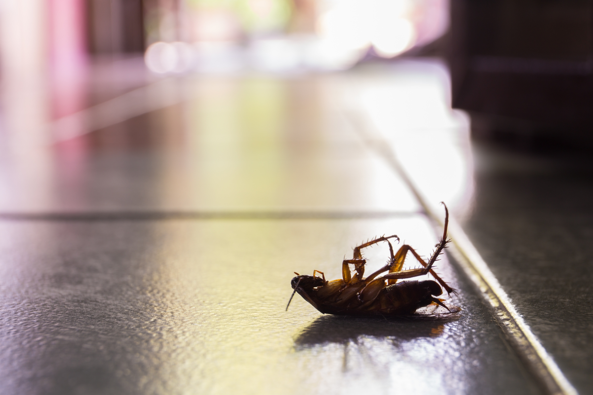 Cockroach Control, Pest Control in Ponders End, Enfield Wash, EN3. Call Now 020 8166 9746